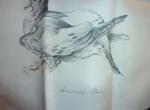 Les pigeons Xavier de Poret pour Hermès